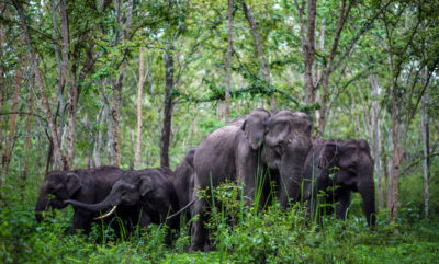 Elephants of Bandipur