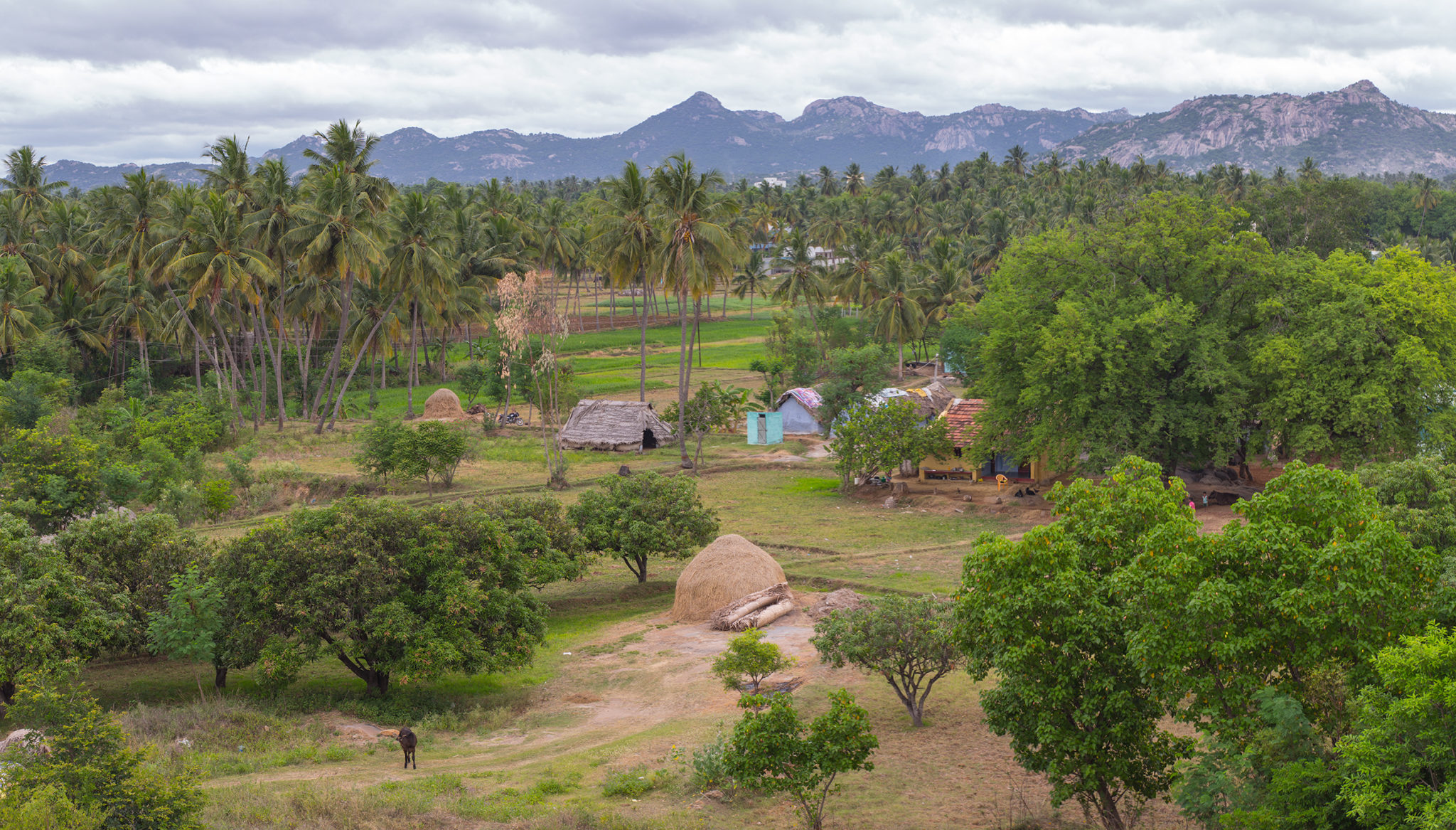A village view in Krishnagiri